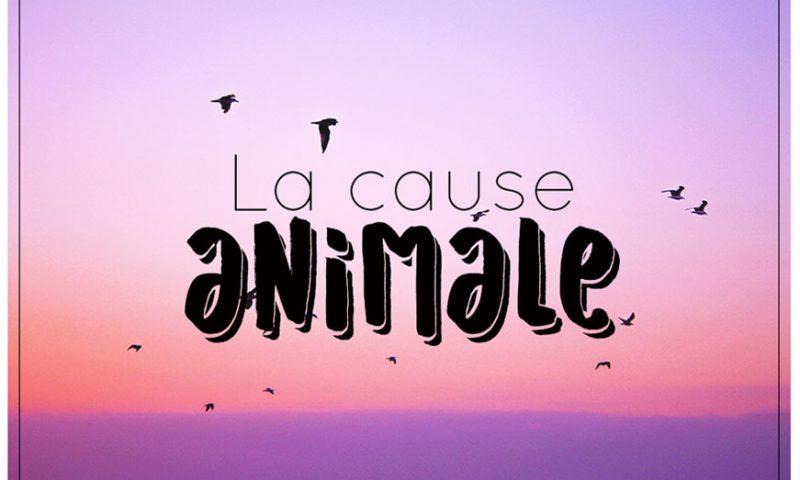 cause-animale-mademoisellevi